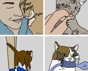 façons dont un chat montre qu'il vous aime